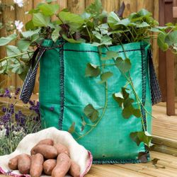 Potato Growing Bags - 4 x 60ltr growing bags