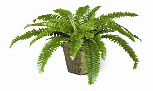 Office Sense Stewart Artificial Boston Fern Wooden Pot