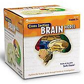 Learning Resources Soft Foam Cross-Section Brain Model