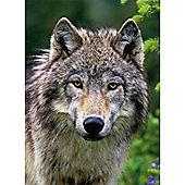 Wolf Portrait Puzzle