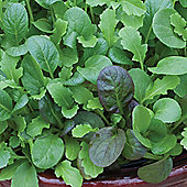 Salad Leaves 'The Good Life Mix' - 1 packet (150 salad seeds)