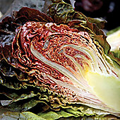 Lettuce 'Intred' (Romaine/Cos) - 1 packet (200 lettuce seeds)