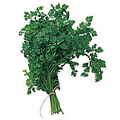 Chervil - 1 packet (750 seeds)
