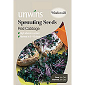 Sprouting Seeds Red Cabbage