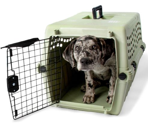 Petmate Intermediate Deluxe Vari Jr. Dog Kennel in Moss Bank Green