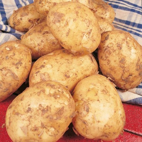 Potato 'Foremost' - 10 tubers