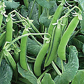 Pea 'Alexandra' (Maincrop) - 1 packet (300 pea seeds)