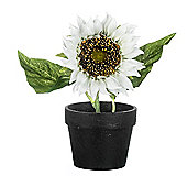 Parlane Artificial Potted White Sunflower Plant H220mm