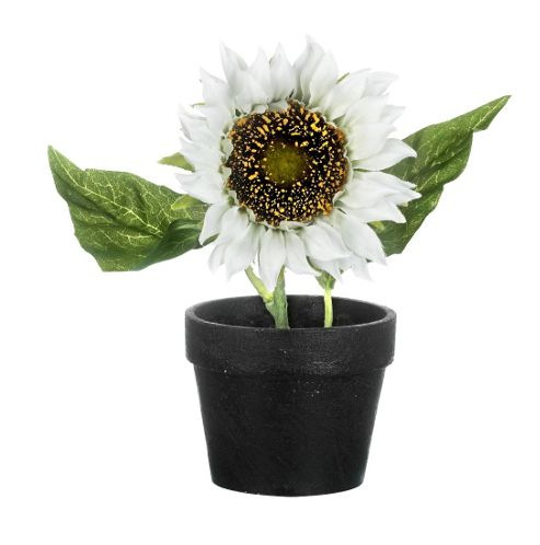 buy parlane artificial potted white sunflower plant h220mm. Black Bedroom Furniture Sets. Home Design Ideas