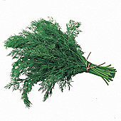 Dill 'Bouquet' - 1 packet (200 seeds)