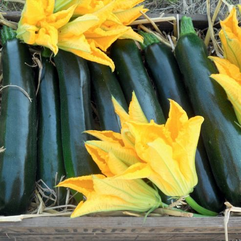 Courgette 'Best of British' F1 Hybrid - 1 packet (10 courgette seeds)