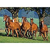 Quarter Horses - 1500pc Puzzle