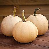 Squash 'Buffy Ball' F1 Hybrid (Winter) - 1 packet (6 squash seeds)
