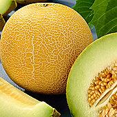 Melon 'Outdoor Wonder' F1 Hybrid - 1 packet (5 melon seeds)