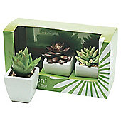 13Cm 3 Asstd Succulents In Ceramic Pot - Gift Boxed