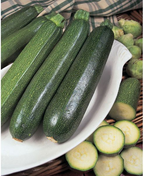 courgette (courgette 'All Green Bush')