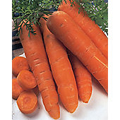 carrot (carrot 'Autumn King')