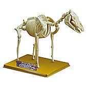 Science Time Skeleton Science Horse Skeleton
