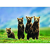 Bear Cubs Standing - Extra Large Piece Puzzle