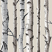 Birch Trees Wallpaper - Cream and Silver - Fine Decor