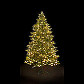 6ft Ashley Fir Luxury Premium QuickLight PE Tree