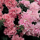 Petunia grandiflora 'Cascade Pink Orchid Mist' F1 Hybrid - 1 packet (25 seeds)