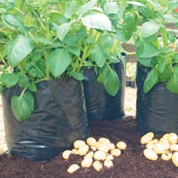 Potato Exhibitor Growing Bags - Black - 20 x 14 litre exhibitor bags