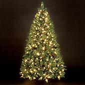 7ft Douglas Pine Pre-Lit Christmas Tree