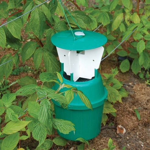 Raspberry Beetle Trap - 1 refill pack
