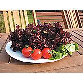 lettuce (cut and come again) (lettuce 'Lollo Rossa')
