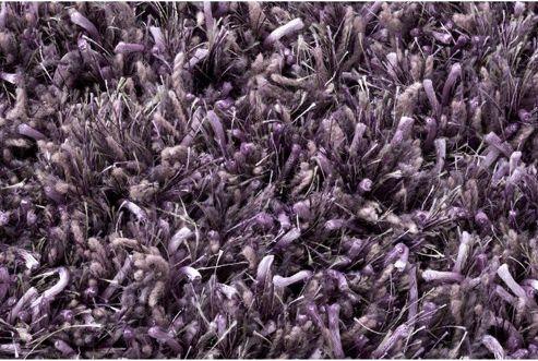 Linie Design Ronaldo Lavender Shag Rug - 200cm x 140cm