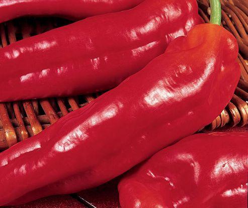 Sweet pepper (pepper 'Long Red Macaroni')