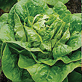 Lettuce 'Winter Density' (Cos) - Part of the Alan Titchmarsh Collection - 1 packet (1500 lettuce seeds)