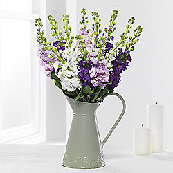 Scented Stocks Jug