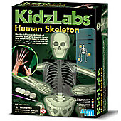 4M Mould and Paint Glow Human Skeleton
