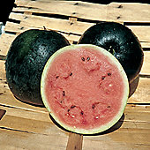 Watermelon 'Anguria Valentina' F1 Hybrid - Vita Sementi® Italian Seeds - 1 packet (10 seeds)