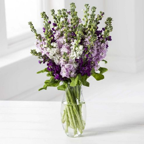 Scented Stocks Bouquet Scented Stocks Bouquet