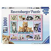 Cute Kitten - XXL 100 Puzzle