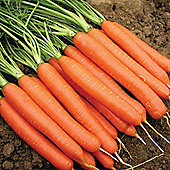 Carrot 'Romance' F1 Hybrid - 1 packet (400 carrot seeds)
