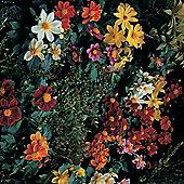 Dahlia variabilis 'Bambino Mixed' - 1 packet (50 seeds)