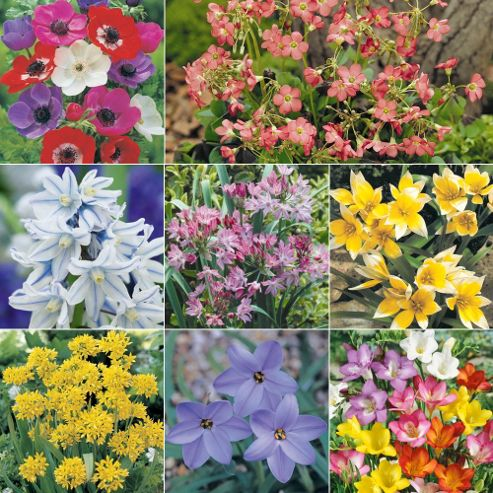 Bulb 'Extra Value Mix' - 170 bulbs