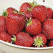 Strawberry Fertiliser - 1 x 100g pack