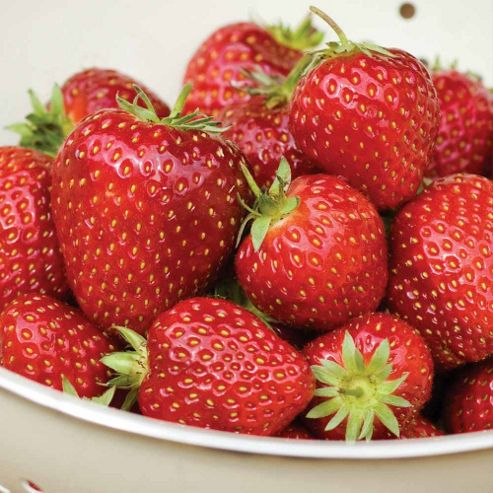 Strawberry Fertiliser - 1 x 100g pack