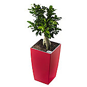 Terrastyle Algarve Tall Square Planter (Set of 2) - Red - 42 cm H x 25 cm W X 25 cm D