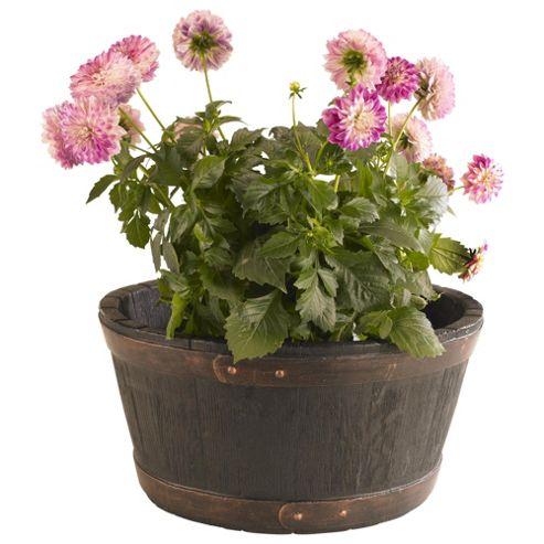 buy strata oakwood barrel planter 49cm from our planters. Black Bedroom Furniture Sets. Home Design Ideas