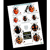 Wildlife World Field guide - Ladybirds