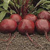 Beetroot 'Moneta' - Part of the Alan Titchmarsh Collection - 1 packet (150 beetroot seeds)
