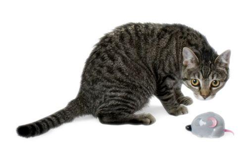 Aspen Pet Catnip Cruiser Mouse Grey Cat Toy