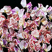 Sweet Pea 'Fragrant Ripples' - 1 packet (40 seeds)