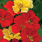 Nasturtium 'Bolero Mixed' - Part of the Alan Titchmarsh Collection - 1 packet (30 seeds)